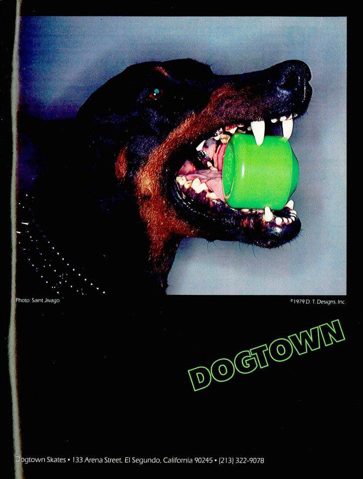 dogtowndog-9150